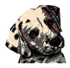 狗 达尔马提亚犬  宠物犬乱针绣精品  斑点狗